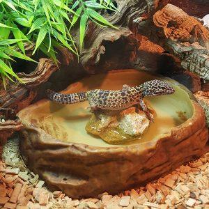 terrario gecko crestado gecko leopardo